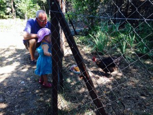 Ella loved the roosters at Helen and Claudes- cookoricoo!