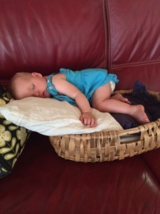 Sleeping in a basket at Helen and Claudes- tuckered out!